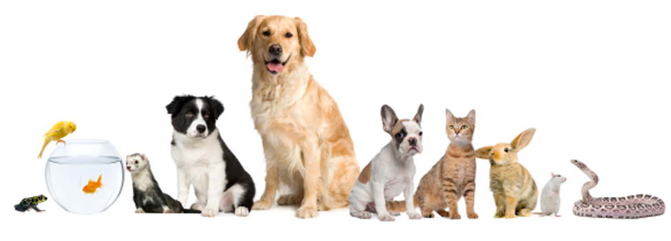 Tarvin Pet Care - Dog Walking, Cat Sitting, Cat Care, Home ...